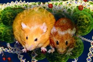 epigenetic mice